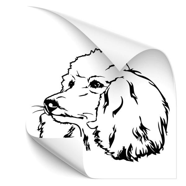Pudel Heckscheiben Sticker - Hunde