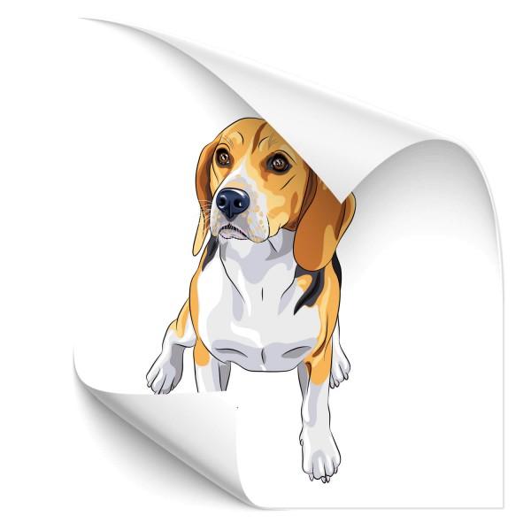 Beagle Heck Sticker - Kategorie Shop