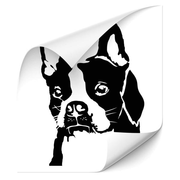 Boston Terrier Car Aufkleber - Hunde